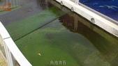 哈魚碼頭噴水池磁磚地面殘膠清除止滑施工-魚池青苔清除-木板走道污垢清除-魚市拍賣區地面污垢清除:10魚池青苔-止滑大師-止滑劑防滑劑止滑防滑施工