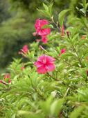 2011飛牛牧場:紅花