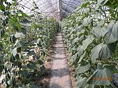 小黃瓜合理化施肥田間成果觀摩會:20090630觀摩會 003.jpg