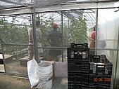 小黃瓜合理化施肥田間成果觀摩會:20090630觀摩會 008.jpg