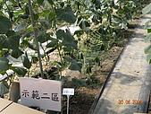 小黃瓜合理化施肥田間成果觀摩會:20090630觀摩會 022.jpg