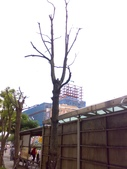 桃園虎頭山公園:虎頭山公園20120624826.jpg