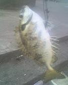 碧海藍天~釣魚樂:12-11-08_1343.jpg