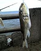 碧海藍天~釣魚樂:01-02-06_2022.jpg