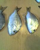碧海藍天~釣魚樂:01-03-06_0828.jpg