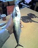 碧海藍天~釣魚樂:01-03-06_0831.jpg