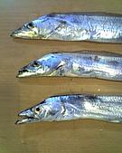碧海藍天~釣魚樂:01-03-06_1118.jpg