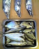 碧海藍天~釣魚樂:01-03-06_1120.jpg