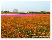高雄縣旅遊:2009大寮賞花行-27