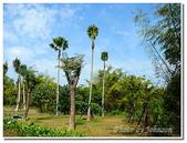 小港旅遊:小港-高雄市熱帶植物園-12