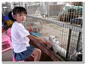 台南縣旅遊:柳營乳牛的家-23