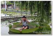 台南縣旅遊:2011白河蓮花季-07