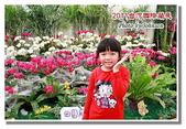 台南市旅遊:2011台灣國際蘭花展-04