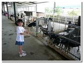 台南縣旅遊:柳營乳牛的家-25