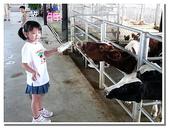 台南縣旅遊:柳營乳牛的家-26