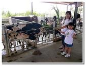 台南縣旅遊:柳營乳牛的家-29