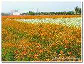 高雄縣旅遊:2009大寮賞花行-30