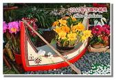 台南市旅遊:2011台灣國際蘭花展-32