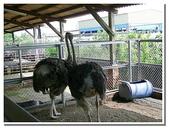 台南縣旅遊:柳營乳牛的家-27