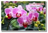 台南市旅遊:2011台灣國際蘭花展-08