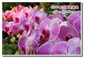 台南市旅遊:2011台灣國際蘭花展-33