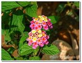 小港旅遊:小港-高雄市熱帶植物園-13