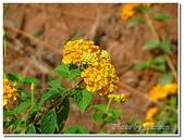 小港旅遊:小港-高雄市熱帶植物園-14
