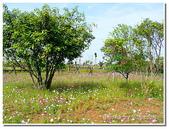 小港旅遊:小港-高雄市熱帶植物園-25