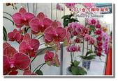 台南市旅遊:2011台灣國際蘭花展-29