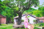 2015-07 林安泰古厝  仙女,旗袍,婚紗:DSC_7246.jpg
