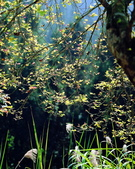 森林:a004.jpg