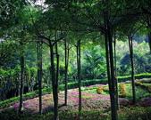 森林:a012.jpg
