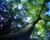 森林:a015.jpg
