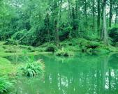 森林:a046.jpg