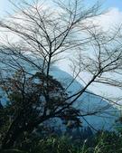 森林:a001.jpg