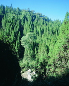 森林:a003.jpg