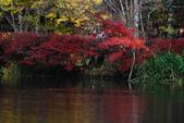 2014-10-21 東京 Day 4 輕井澤:11 雲場池-04.JPG