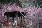 2014-02-15 武陵農場露營、合歡山賞雪:10武陵農場-37.JPG