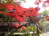 2012-11-24 東京自由行 Day3 -- 深大寺:20 深大寺.JPG