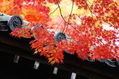 2013-11-28 關西賞楓 Day 3 東福寺:05 東福寺-06.JPG