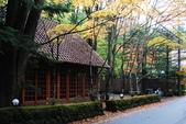 2014-10-21 東京 Day 4 輕井澤:10 往雲場池-18.JPG