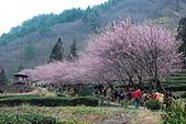 2014-02-15 武陵農場露營、合歡山賞雪:10武陵農場-25.JPG