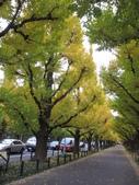 2012-11-25 東京自由行 Day 4 -- 銀杏並木、表參道、明治神宫:10 銀杏並木.JPG