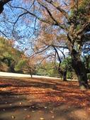 2012-11-25 東京自由行 Day4 -- 新宿御苑:05 新宿御苑.JPG