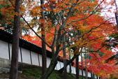 2013-11-28 關西賞楓 Day 3 東福寺:05 東福寺-07.JPG