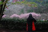 2014-02-15 武陵農場露營、合歡山賞雪:10武陵農場-39.JPG