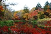 2014-10-21 東京 Day 4 輕井澤:11 雲場池-17.JPG