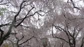 2015-04-13 京都八日遊 Day 3 六孫王神社、金閣寺、仁和寺、原谷苑:05 原谷苑-19.JPG