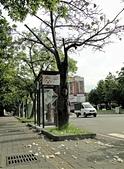 2016-06-05台中南區健康公園 美人樹:DSC07535.JPG