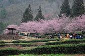 2014-02-15 武陵農場露營、合歡山賞雪:10武陵農場-40.JPG